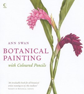 Botanical painting with coloured pencils by Ann Swan
