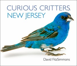 Curious Critters New Jersey by David FitzSimmons