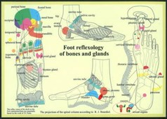 Foot Reflexology of Bones & Glands -- A4
