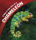 A day in the life of a chameleon