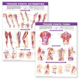 Trigger Point Chart Set: Torso & Extremities Paper by Anatomical Chart Company