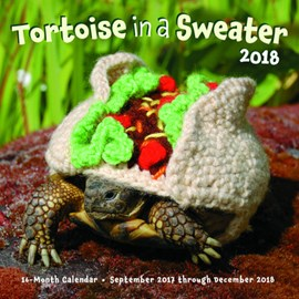Tortoise in a Sweater 2018 by Katie Bradley