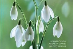 Card Box of 20 Notecards and Envelopes: Snowdrop
