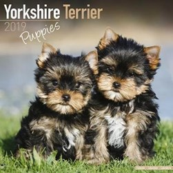 Yorkshire Terrier Puppies Calendar 2019 by