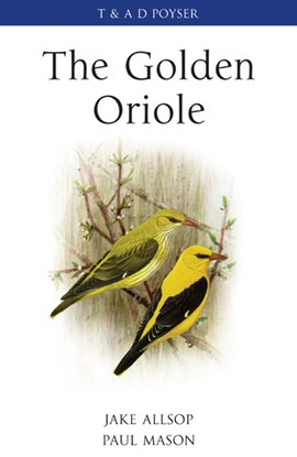 The golden oriole by Paul Mason