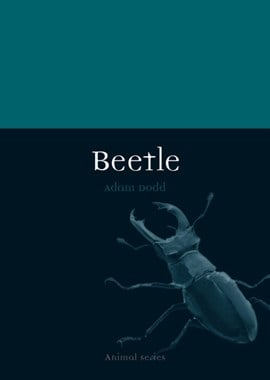 Beetle by Adam Dodd