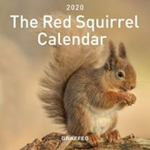 Red Squirrel Calendar 2020, The