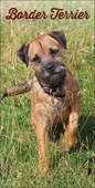 Border Terriers Slim Diary 2020